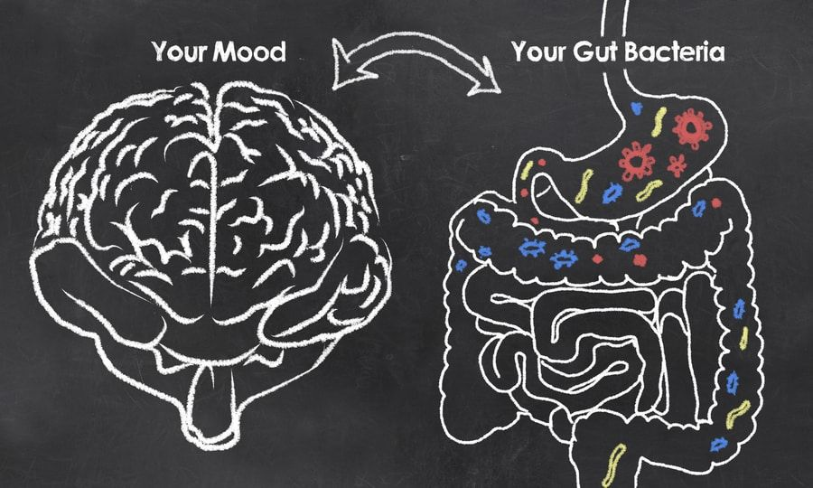 Gut Bacteria And Your Mood